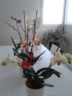 Le mie orchidee rifioriscono sempre... Il segreto? In abbondanza luce, acqua e amore!