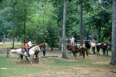 Uwharrie National Forest NC Hiking, horseback riding, biking, ATV trails fising, something for everyone