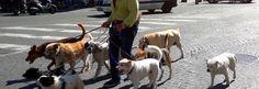 Napoli: addio al papà dei cani randagi, Salvatore Cantalupo - Spettegolando