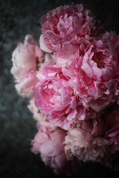 Peonies by Emily Quinton Pink Peonies, Pink Roses, Pink Flowers, Tea Roses, Exotic Flowers, Yellow Roses, Peony Flower, My Flower, Cactus Flower