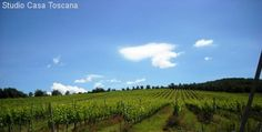 Immobilienangebot - Caldana - Imposantes Anwesen auf sanftem Hügel, 18km vom Meer entfernt