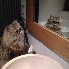 I see a girl in the mirror 🎶 oow yah 🎶🎶 Cats Of Instagram, Instagram Posts, Mirror, Animals, Animais, Animales, Animaux, Mirrors, Animal
