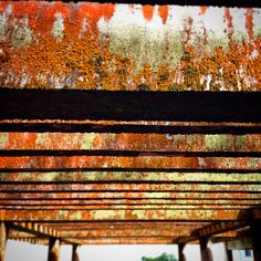 Rustic shot Railroad Tracks, Shots, Rustic, Photography, Country Primitive, Photograph, Fotografie, Retro, Photoshoot