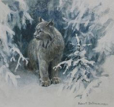 Robert Bateman Lynx In Snow