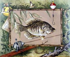Crappie Wholesale Art Print at Lieberman's Fish Artwork, Framed Artwork, Rustic Fishing Decor, Fun Prints, Fine Art Prints, Fishing Signs, Crappie Fishing, Coral, Illustrations