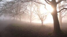 Fog makes photo easy Hampstead Heath, Make Photo, Dog Walking, Country Roads, Celestial, Sunset, Easy, Outdoor, Sunsets
