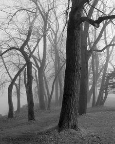 Landscape Photography, Landscapes, Wall Art, Fine Art Photography, Black and White, Buffalo NY Photos on Etsy, $20.00