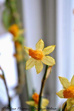 Life by ScienceHelena: Våren kommer så småningom
