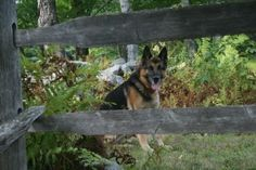 How to create your own dog food, from the VT farm! #dogs