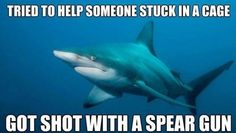 Funny pictures about Is tough being a shark. Oh, and cool pics about Is tough being a shark. Also, Is tough being a shark. Shark Week Memes, Shark Meme, Shark Humor, Shark Bait, Shark Shark, Misunderstood Shark, Funny Animals, Cute Animals, I Love To Laugh