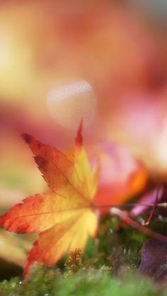 Nature iPhone 6 Plus Wallpapers - Bokeh Autumn Maple Leaf iPhone 6 Plus HD Wallpaper