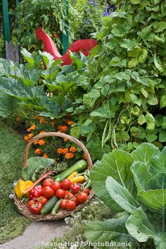 harvest of organic vegetables in a small space edible landscaping garden border | PhotoBotanic