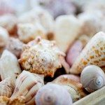 How to clean seashells, sea urchins and coral - The Florida Living Magazine | The Florida Living Magazine