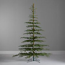 John Lewis Argyle Green Fir Christmas Tree 8ft I Have To This