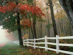 Autumn Autumn Splendor