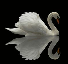 """There was a swanskin, and you thought it might make you beautiful."" p. 264"