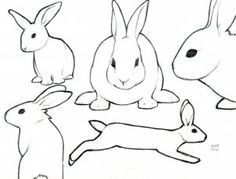 how to sketch a rabbit step 4