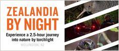 Zealandia By Night Tour Tours, Night