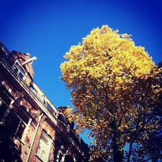 #Autumn | #tree | #Amsterdam| barbaravisser on Instagram