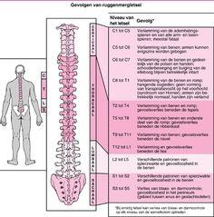 Opbouw van de ruggenwervel (rug /hersenen zenuwbanen)   't Lichtpuntje