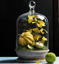 Create this stunning fall accent with a simple shallow dish, bell jar, and a few mini pumpkins and colorful leaves from your yard.