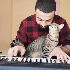 """From """"The gentleman can not sleep away from the piano"""" """" – All Pictures Funny Cats And Dogs, Cute Cats And Kittens, I Love Cats, Cute Dogs, Cute Cat Gif, Cute Funny Animals, Cute Baby Animals, Animals And Pets, Funny Animal Videos"""