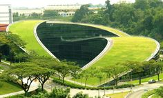 green turfed roofscape « DESIGNFLUTE
