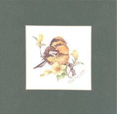 Yellow Warbler 8 x 8 matted lithograph