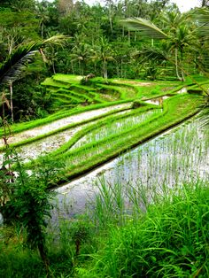 Bali rice paddy terrace. Bali is a province in the country of Indonesia. The province covers a few small neighbouring islands as well as the isle of Bali. The main island is located in the westernmost end of the Lesser Sunda Islands, lying between Java to the west and Lombok to the east. It is one of the country's 34 provinces with the provincial capital at Denpasar towards the south of the island. http://en.wikipedia.org/wiki/Bali