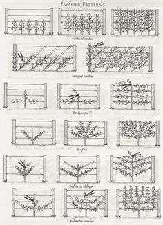 Espalier it's a system of growing dwarf fruit trees on espaliers where they ar. Espalier it's a sy Potager Garden, Veg Garden, Fruit Garden, Garden Care, Garden Trees, Edible Garden, Garden Plants, Garden Landscaping, Tropical Garden