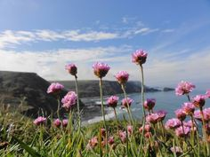 Hartland along the South West Coast Path -  Michael John Stubbs