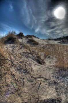 "Fine Art Photography - Sleeping Bear Sand Dunes Tangled Roots - Home Office Decor - 8"" x 12"" photograph"