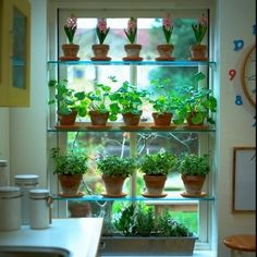 Do it yourself window mounted hanging herb garden blank wall make a perfect home dcor with these 17 extraordinary miniature indoor gardens solutioingenieria Choice Image