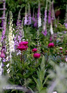 Landet Krokus Garden Inspiration, Plants, Beautiful Gardens, Plant Combinations, Garden Living, Flowers, Flower Garden, Outdoor Inspirations, Cottage Garden