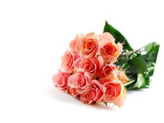 What Does Your Favourite Flower Mean?  http://www.apsense.com/article/what-does-your-favourite-flower-mean.html