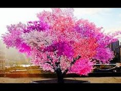 stone fruit tree - Google Search