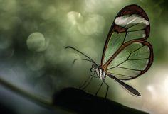 Klein, aber oho!: Die besten Leserbilder zum Thema 'Makro'