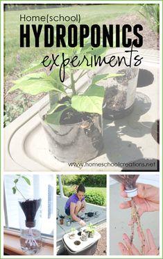 simple home hydroponics experiements using plastic bins, plastic bottles, and yarn to feed plants #HomeHydroponics