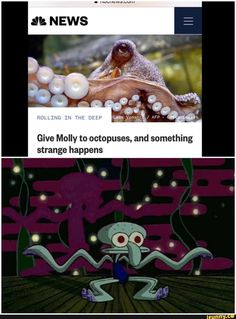 Dk- NEWS Give Molly to octopuses, and something strange happens - iFunny :) Believer Imagine Dragons, Alexa Davalos, Dankest Memes, Funny Memes, Hilarious, Funny Spongebob Memes, Spongebob Squidward, Spongebob Squarepants, Rainbow Bedding