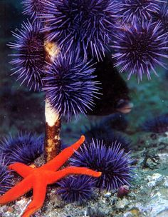 Sea #urchins and #starfish