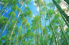 Для грусти нету оснований, Кочуем в длинном караване Всех поколений и веков, Над нами стая облаков, А перед нами дали, дали. И если полюбить детали, Окажется, что мы богаты Восходом, красками заката, И звуками, и тишиной, И свистом ветра за стеной, И тем, как оживают листья Весной. И если в бескорыстье Земных поступков наших суть, Не так уж тяжек этот путь.  Лариса Миллер