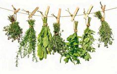 10 curiosidades sobre las plantas medicinales