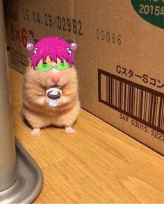 Anime Kitten, Gato Anime, Otaku Anime, Anime Manga, Anime Guys, Fanarts Anime, Anime Characters, Fictional Characters, Funny Anime Pics