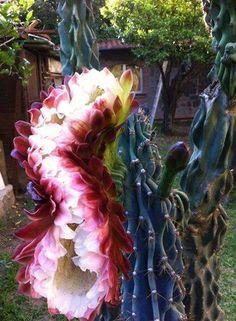 cactus con hermosa flor