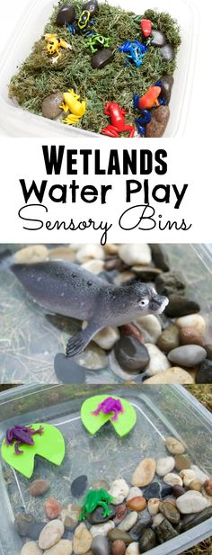 Wetlands & water play sensory bins. From frogs to bogs - there is so much water sensory play you can create and learn with! Hands on preschool learning fun with Ellie the Explorer on @WildBrainKids ad #sensory #play #kids #learning