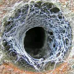 Spider web over a hole in brick