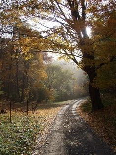 A country road in Boone, N.C.