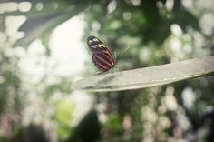 Butterfly in Artis, by Jorinde Reijnierse