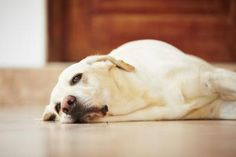 Homemade pet safe floor cleaners   eHow UK