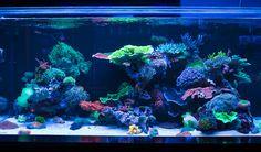 World Wide Corals Coral Reef Aquarium, Saltwater Aquarium Fish, Saltwater Tank, Marine Aquarium, Freshwater Aquarium, Nano Reef Tank, Reef Tanks, Reef Aquascaping, Cool Fish Tanks